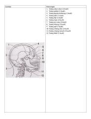 tulang tulang manusia.docx